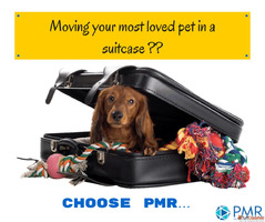 Safe pet moving services available in Bangalore